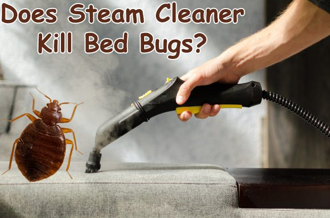 Does Steam Cleaner Kill Bed Bugs