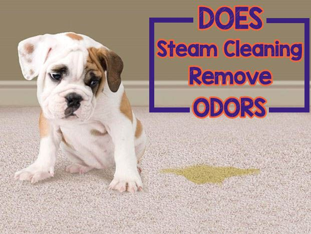 Does Steam Cleaning Remove Odors of cat and dog urine from carpet or tile floor