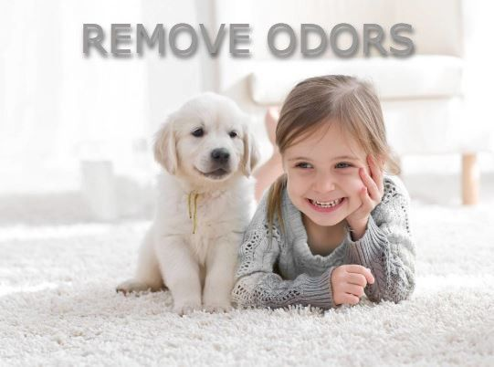 Steam Cleaner removes pet odors
